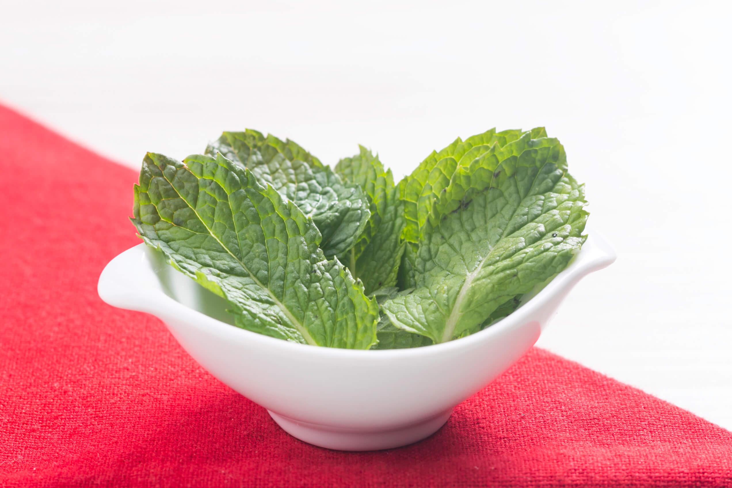 Saiba mais sobre a Hortelã, um dos ingredientes utilizados pela Liv Up