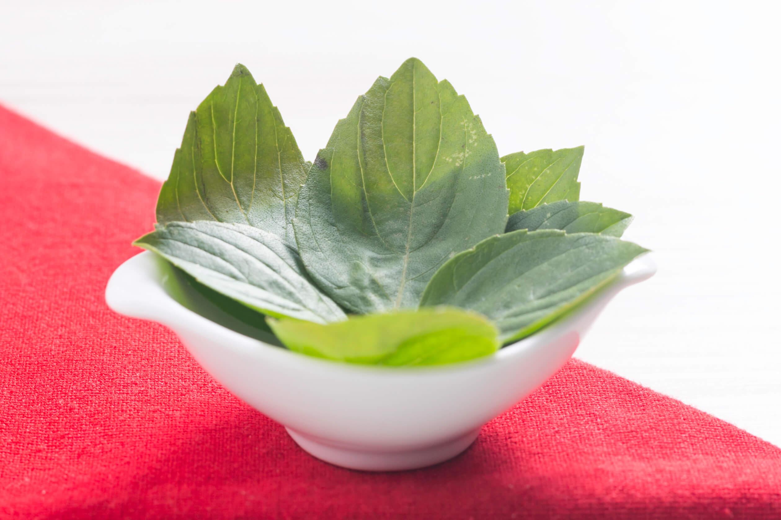 Saiba mais sobre o Manjericão, um dos ingredientes utilizados pela Liv Up